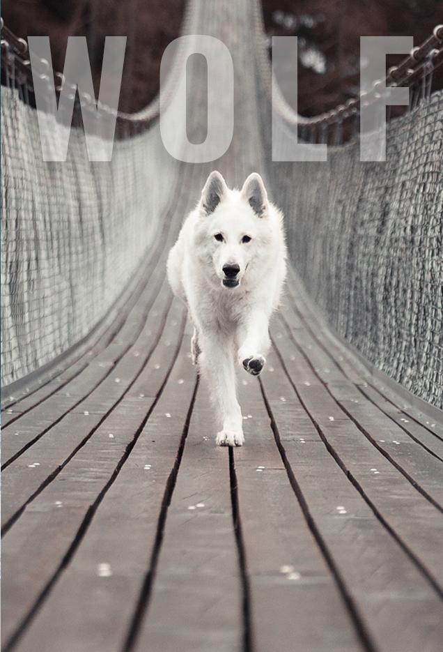 Wolf Sisnet 360 Project